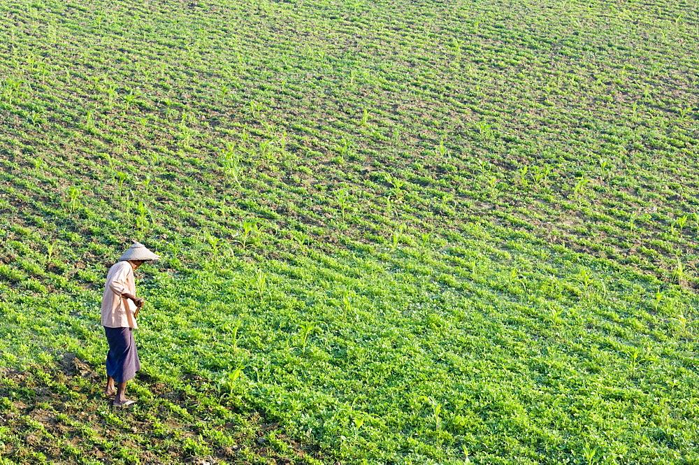Farmer, Amarapura, Myanmar (Burma), Asia