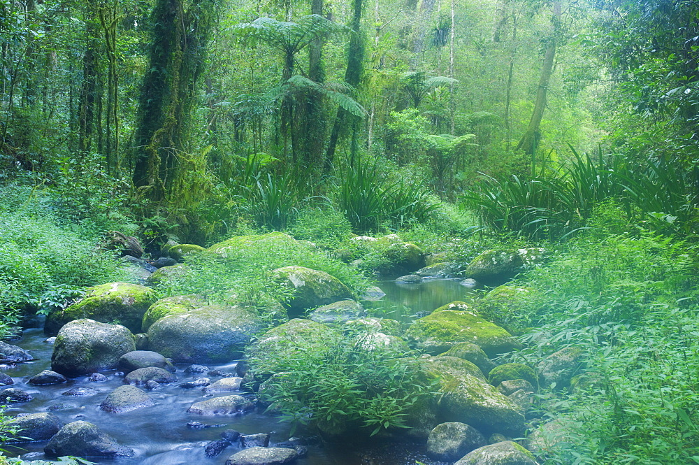 Brindle Creek, Border Ranges National Park, UNESCO World Heritage Site, New South Wales, Australia, Pacific