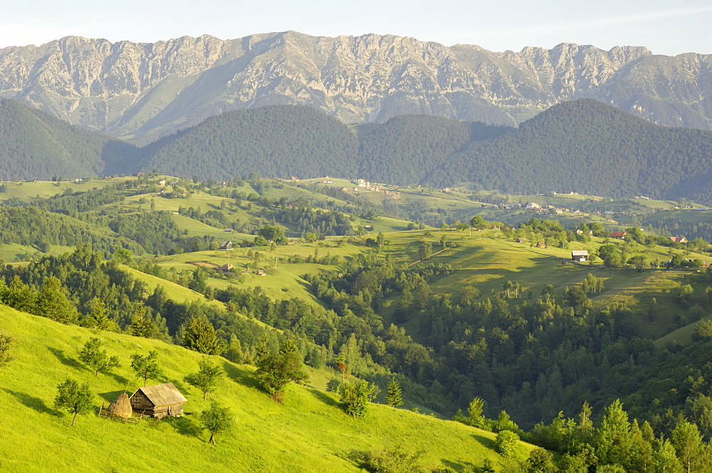 Transylvanian Alps, near Fundata, Transylvania, Romania, Europe - 762-342