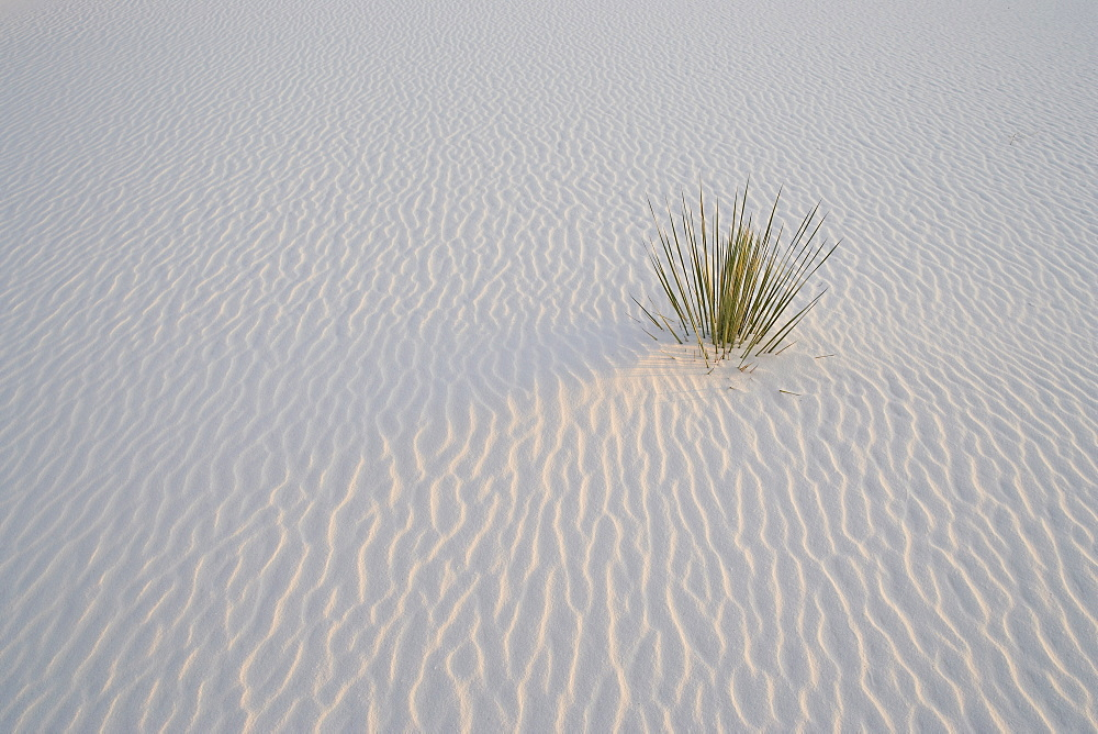 Sand ripples and yucca in last light, White Sands National Monument, New Mexico, United States of America, North America