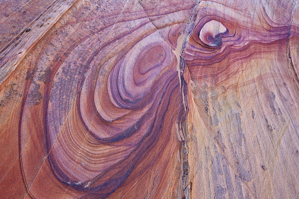 Purple loops in sandstone, Coyote Buttes Wilderness, Vermilion Cliffs National Monument, Arizona, United States of America, North America