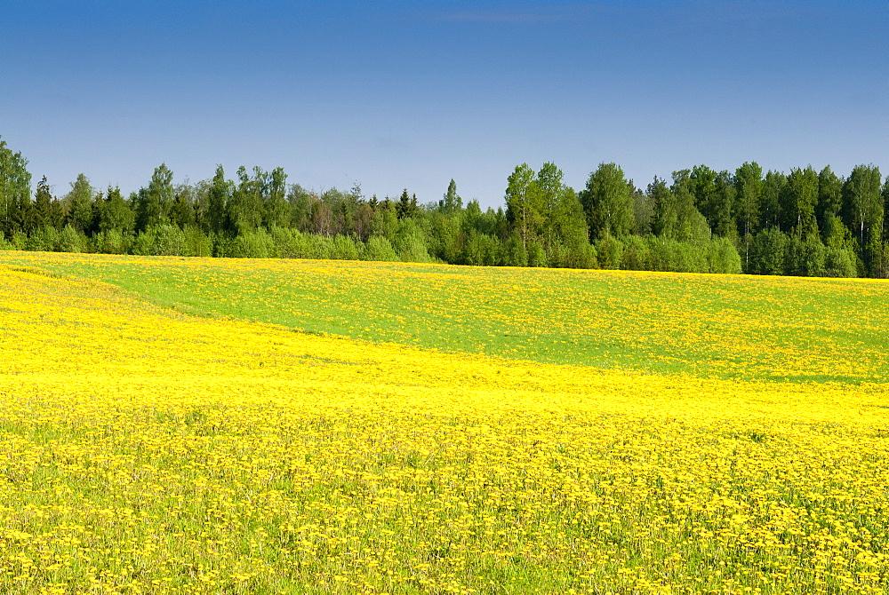 Fields at Varska, Estonia, Baltic States, Europe