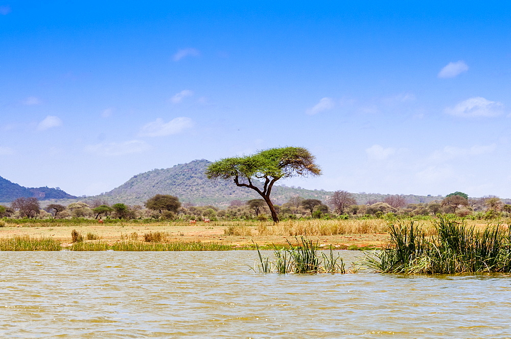 Shore of Lake Jipe, Tsavo West National Park, Kenya, East Africa