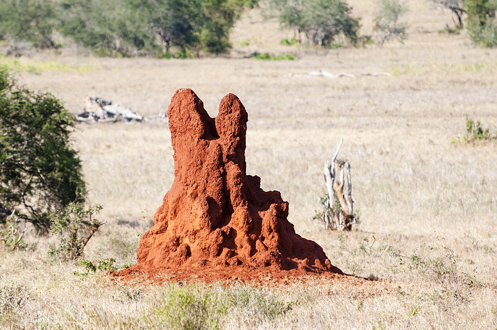 Termite Mound, Taita Hills Wildlife Sanctuary, Kenya, East Africa