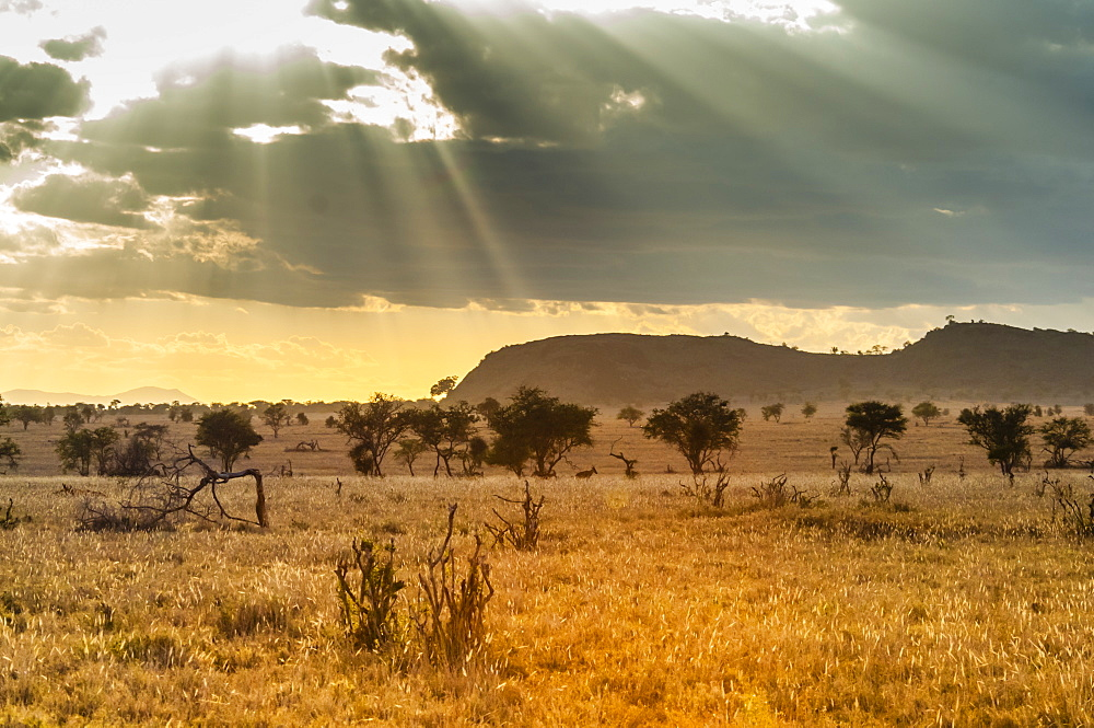 The Savannah, Taita Hills Wildlife Sanctuary, Kenya, East Africa