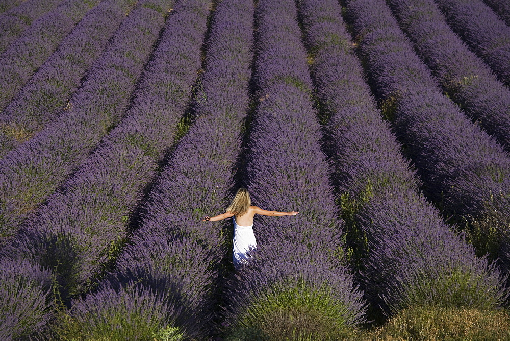 Woman in a lavender field, Provence, France, Europe - 772-2213
