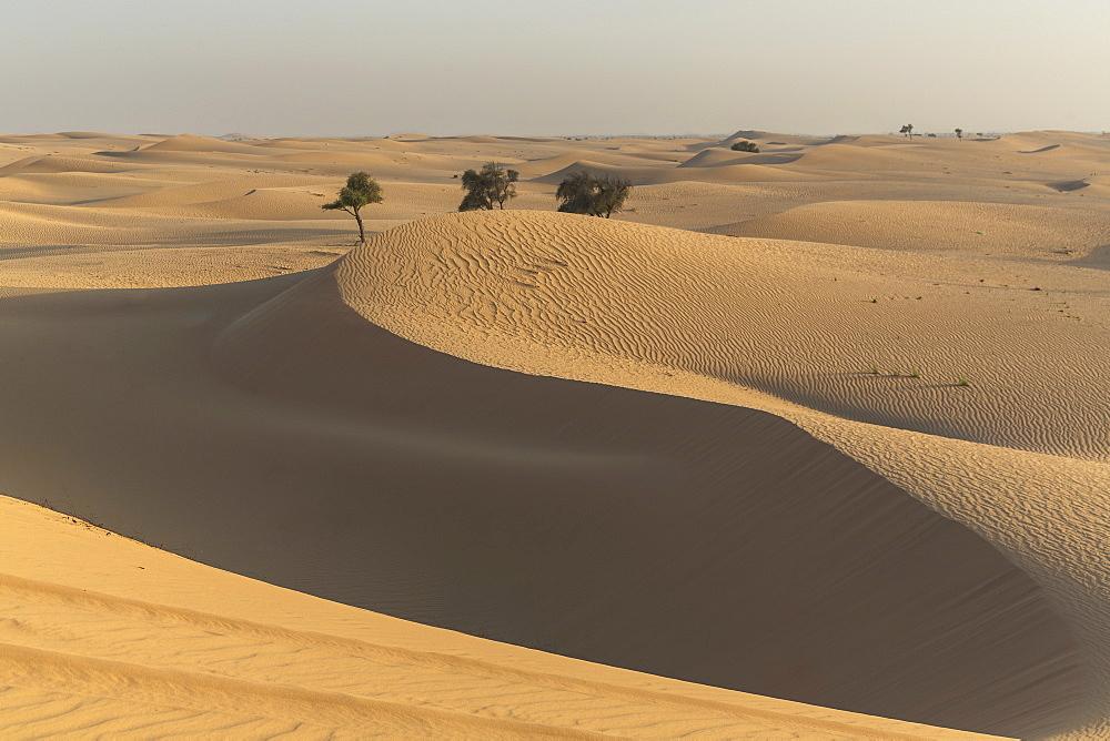 The desert near Liwa, Abu Dhabi, United Arab Emirates, Middle East