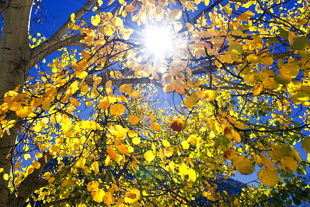 Sun through autumn leaves, Switzerland, Europe - 772-3670