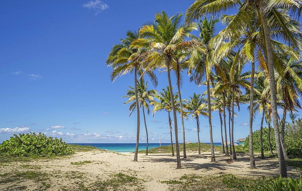 Playa De L'Este, Havana, Cuba, West Indies, Caribbean, Central America