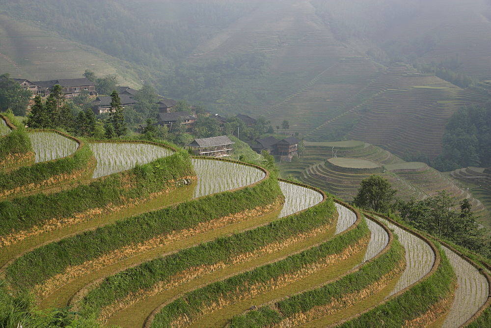 Longsheng terraced ricefields in June, Guangxi Province, China, Asia
