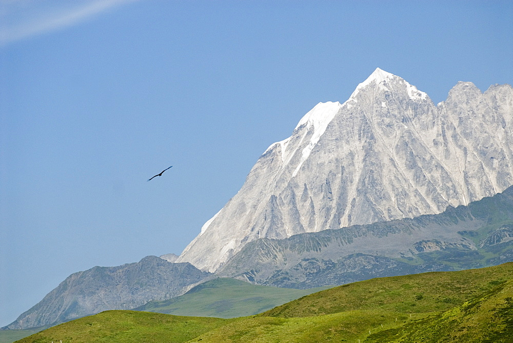 Snow mountain and eagle, Tagong Grasslands, Sichuan, China, Asia - 784-55