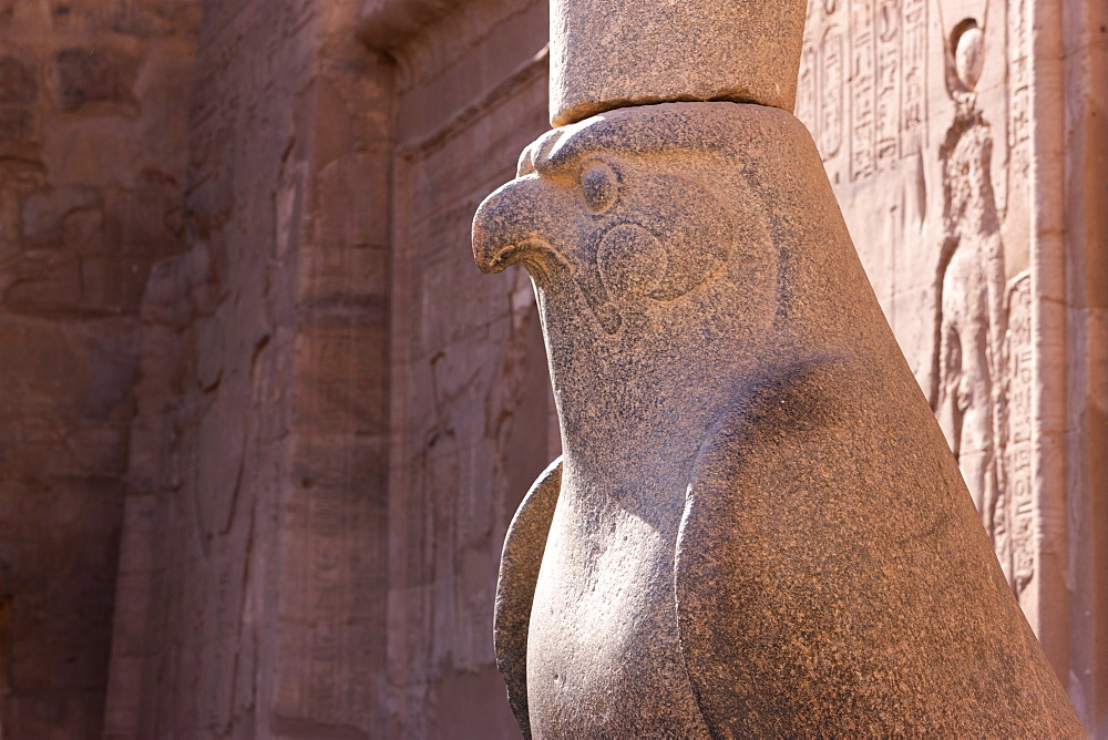 Statue of Horus in the ancient Egyptian Temple of Edfu, Egypt, North Africa, Africa