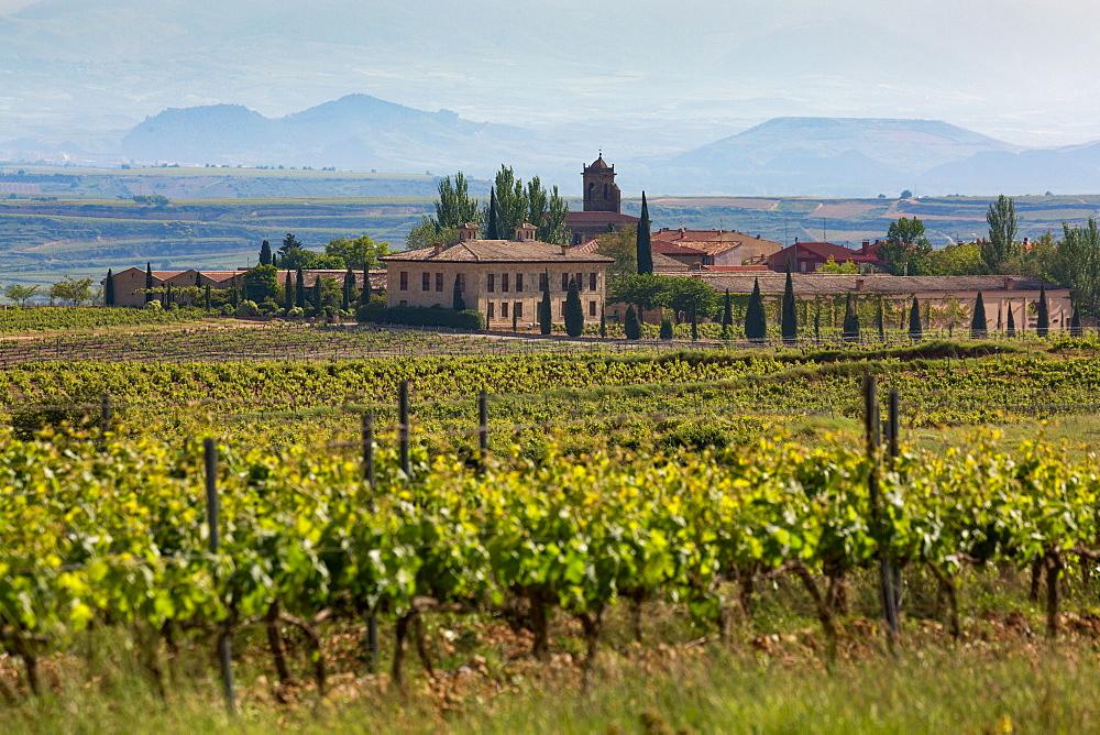 Idyllic vineyard in La Rioja, Spain, Europe - 785-2088
