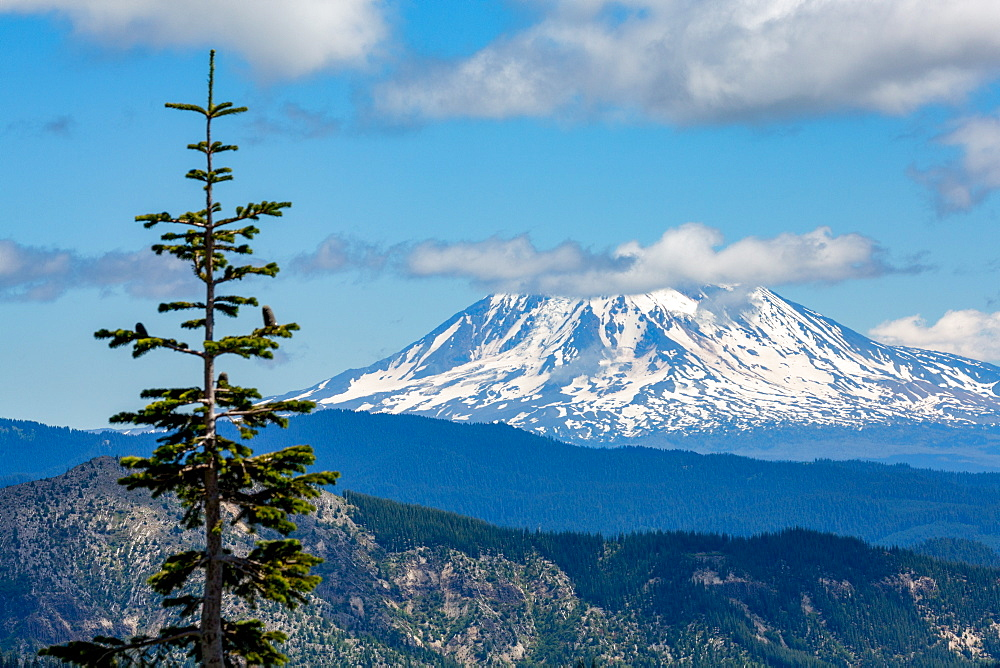 Mount Adams seen from Mount St. Helens, part of the Cascade Range, Pacific Northwest region, Washington State, United States of America, North America