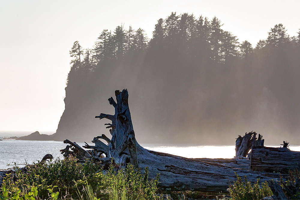 Driftwood on the beach at La Push on the Pacific Northwest coast, Washington State, United States of America, North America - 785-2153