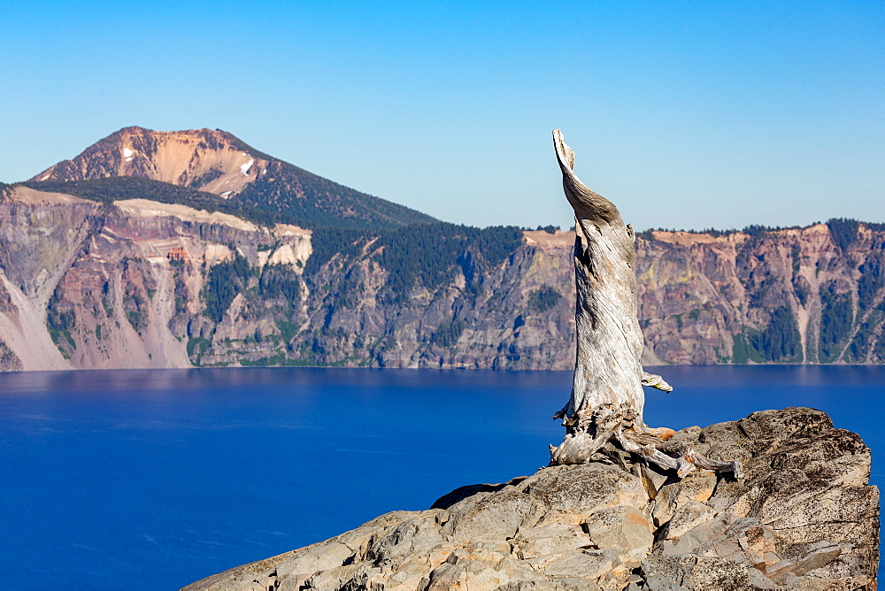Lone tree trunk over Crater Lake, the deepest lake in the USA, part of the Cascade Range