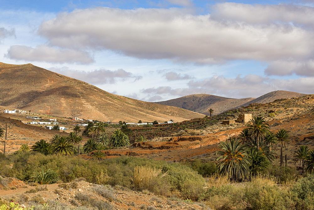 Barranco de las Penitas (Penitas Ravine) on the volcanic  island of Fuerteventura, Canary Islands, Spain, Europe - 785-2264