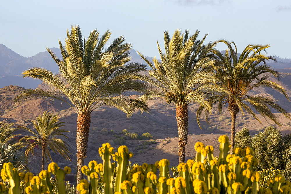 Palm trees and mountains near Maspalomas, Gran Canaria, Canary Islands, Spain, Atlantic, Europe
