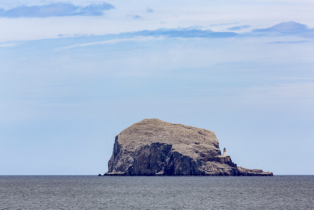 Bass Rock, a tiny uninhabited island in the Firth of Forth, home to a large colony of gannets, East Lothian, Scotland, United Kingdom, Europe - 785-2339