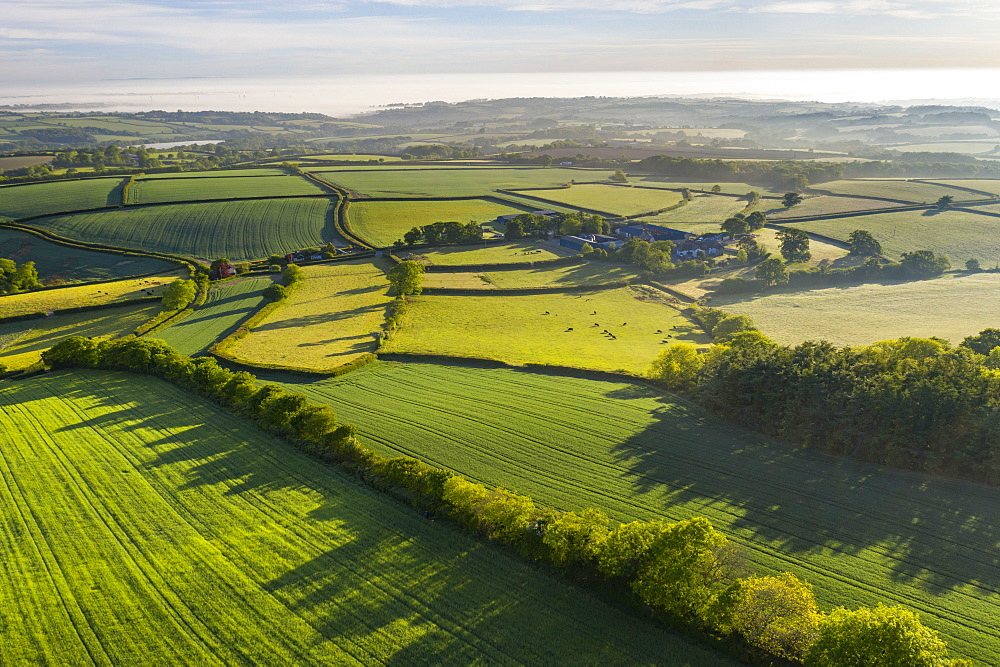 Verdant rolling countryside surrounding Livaton Farm, South Tawton, Devon, England. Spring (May) 2020.