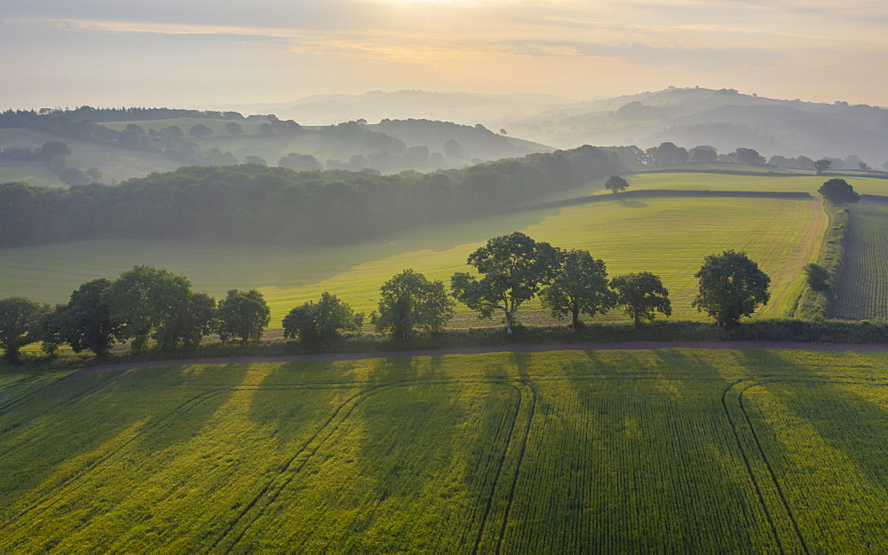 Rolling farmland on a hazy summer morning, Crediton, Devon, England, United Kingdom, Europe