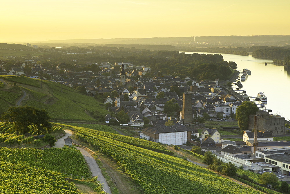 Vineyards and River Rhine at sunrise, Rudesheim, Rhineland-Palatinate, Germany, Europe