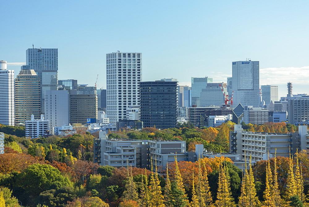 Autumnal trees in Meiji Jingu Gaien and skyscrapers, Tokyo, Honshu, Japan, Asia