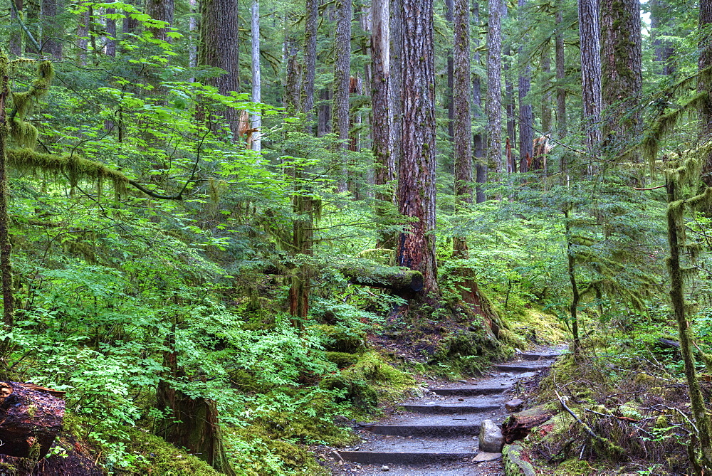 Trail to Sol Duc Falls, Rain Forest, Olympic National Park, UNESCO World Heritage Site, Washington, United States of America, North America