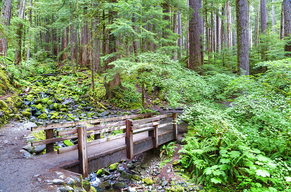 Foot Bridge, Trail to Sol Duc Falls, Rain Forest, Olympic National Park, UNESCO World Heritage Site, Washington, United States of America, North America