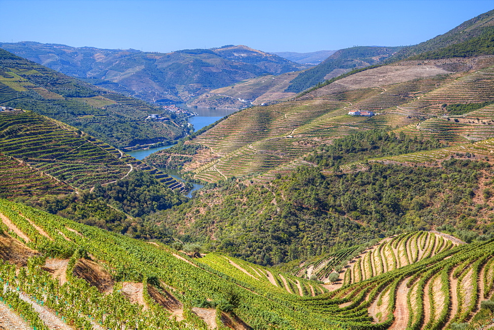 Vineyards and the Douro River, Alto Douro Wine Valley, UNESCO World Heritage Site, Portugal, Europe - 801-1985