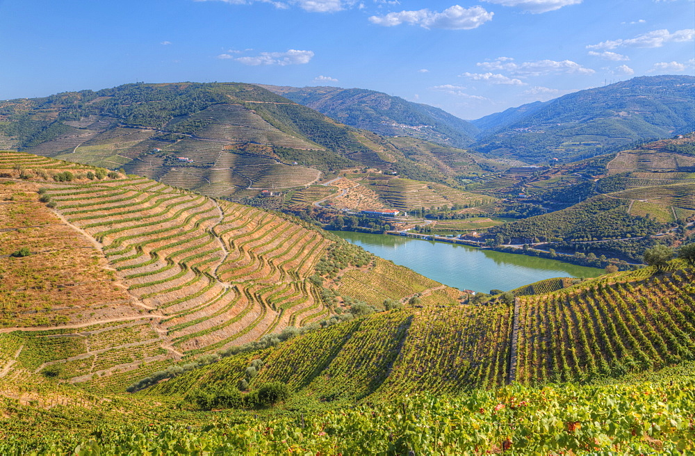 Vineyards and the Douro River, Alto Douro Wine Valley, UNESCO World Heritage Site, Portugal, Europe - 801-1986