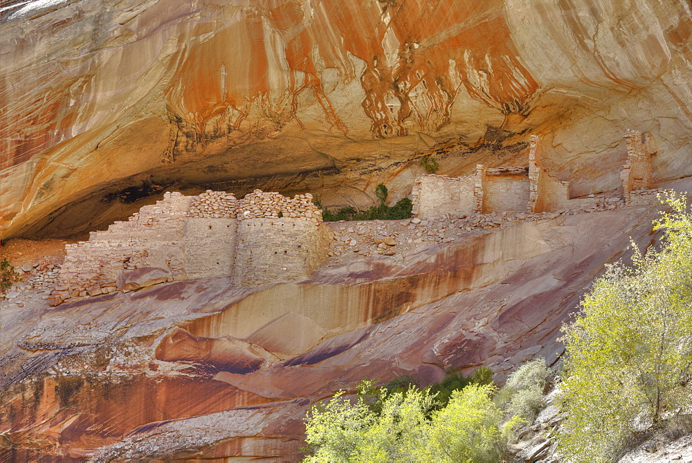 Anasazi Ruins, Monarch Cave, Butler Wash, near Bluff, Utah, United States of America, North America - 801-2166