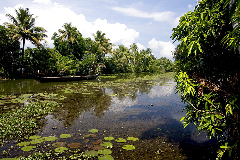 Backwaters of Kumarakom, Kottayam, Kerala, India, Asia - 804-307