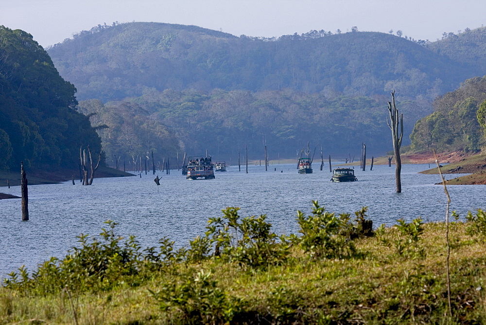 Boating, Periyar Tiger Reserve, Thekkady, Kerala, India, Asia - 804-314