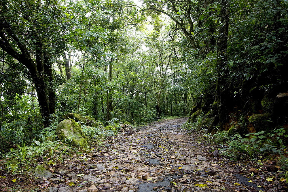 Path in Shola forest, Eravikulam National Park, Kerala, India, Asia - 804-359