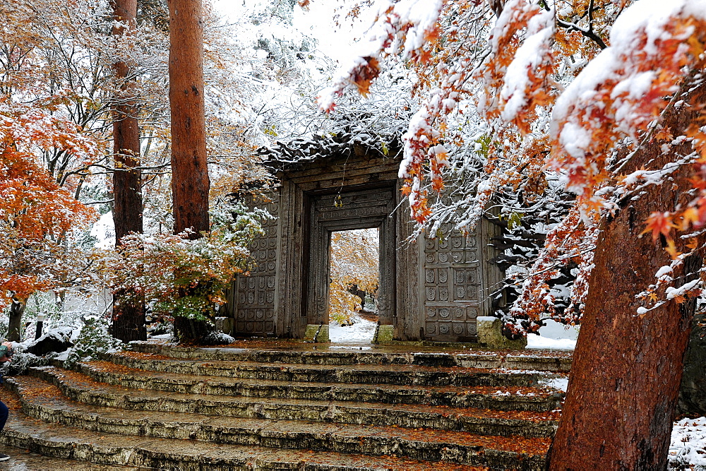 First fall of snow onto autumn coloured maple leaves, at entrance to Kubota Itchiku Kimono Museum, Fujikawaguchiko, Japan, Asia
