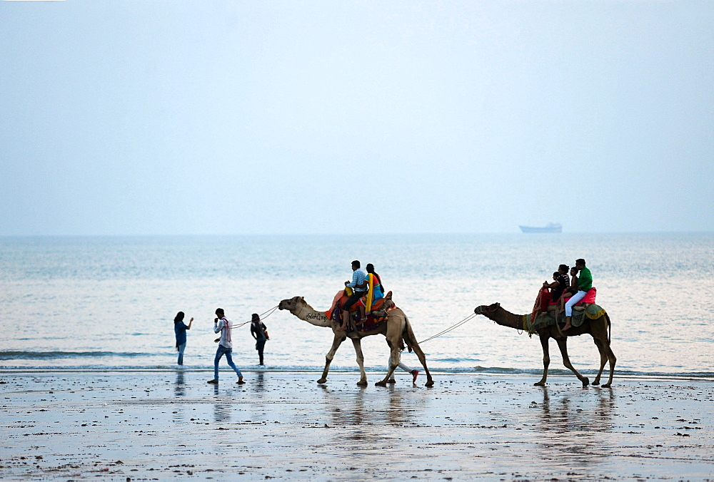 Diwali holidaymakers taking camel rides along the shore at sunset, Mandvi, Gujarat, India, Asia