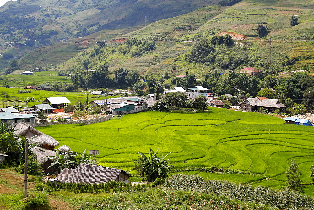 Rice fields on terraces, Sapa, Vietnam, Indochina, Southeast Asia, Asia - 809-7876
