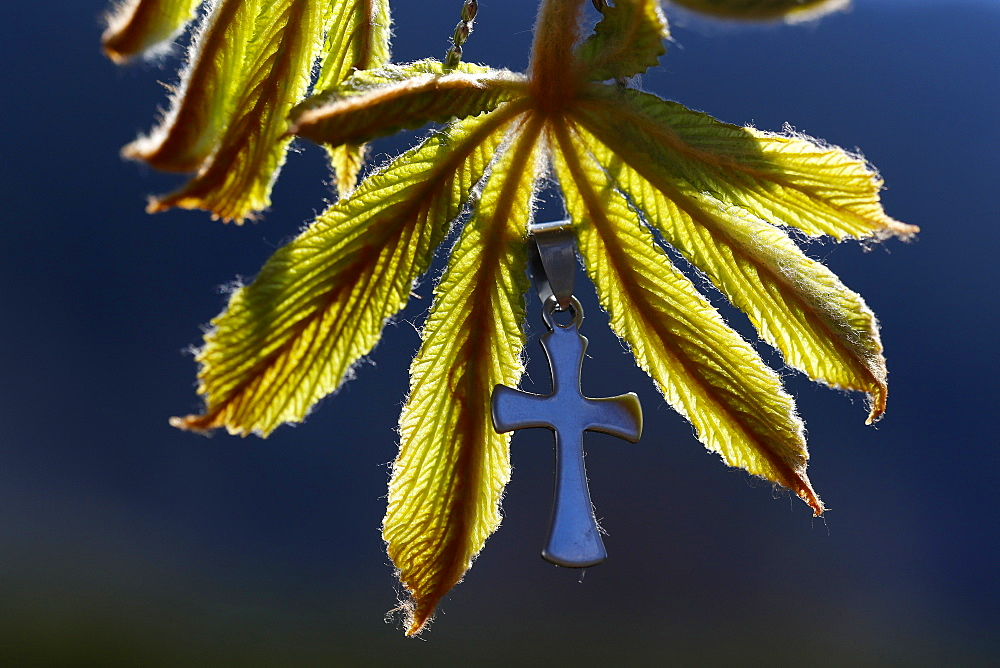 Pendant with cross on a young green chestnut leaf at springtime, France, Europe - 809-8148