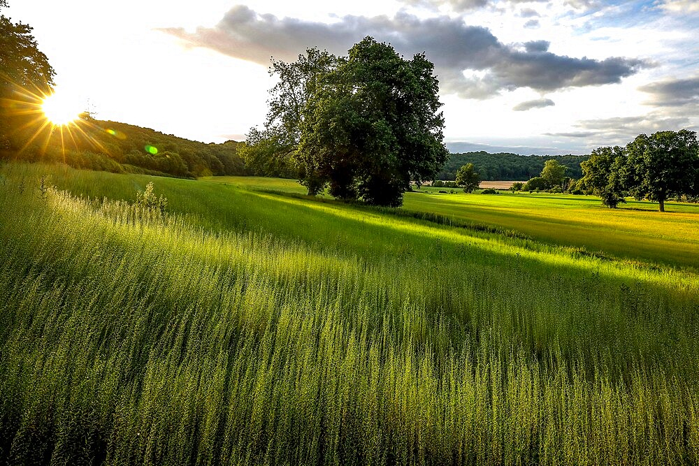 Flax field in Eure, France, Europe - 809-8169