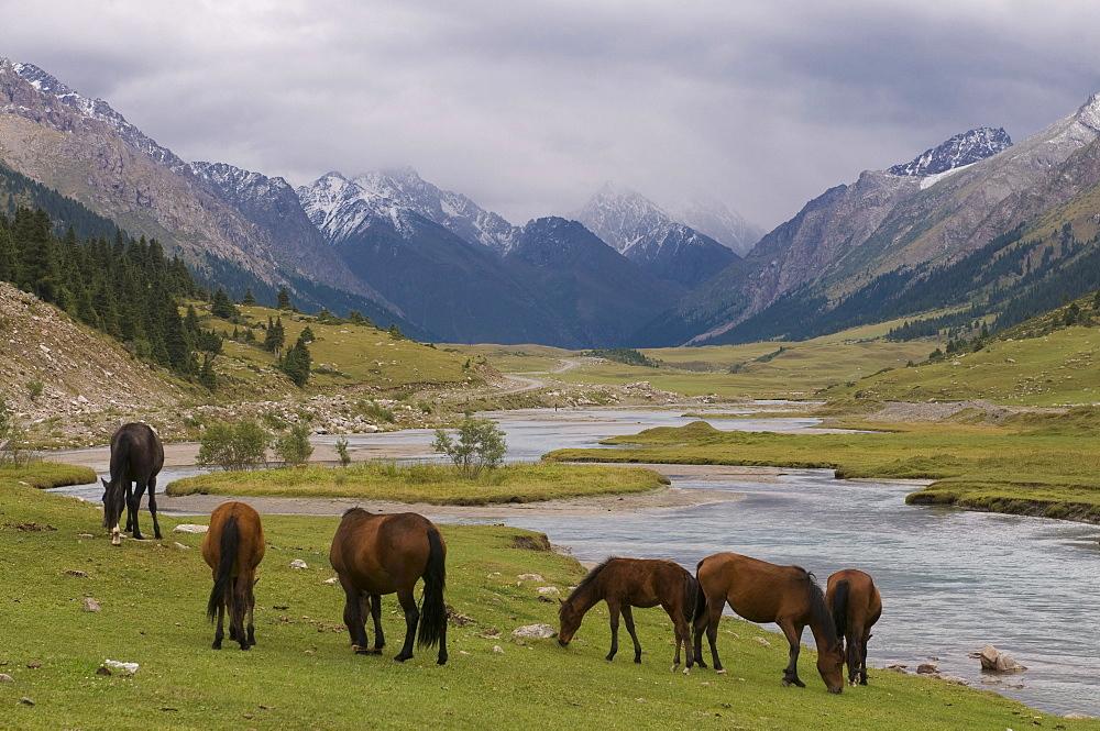 Wild horses at river, Karkakol, Kyrgyzstan, Central Asia