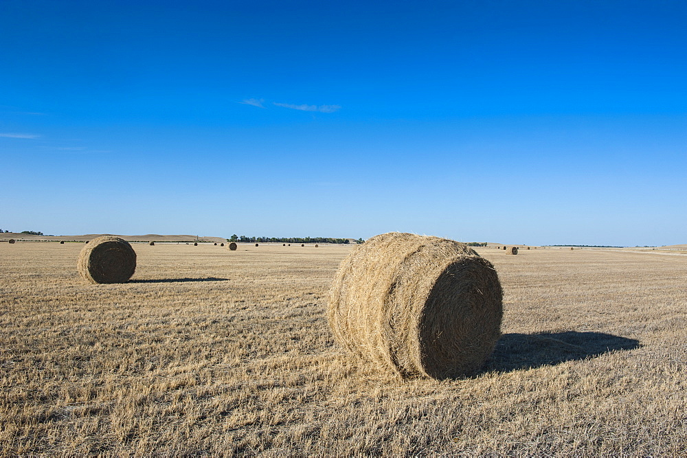 Hay bales on a field along Route two through Nebraska, United States of America, North America