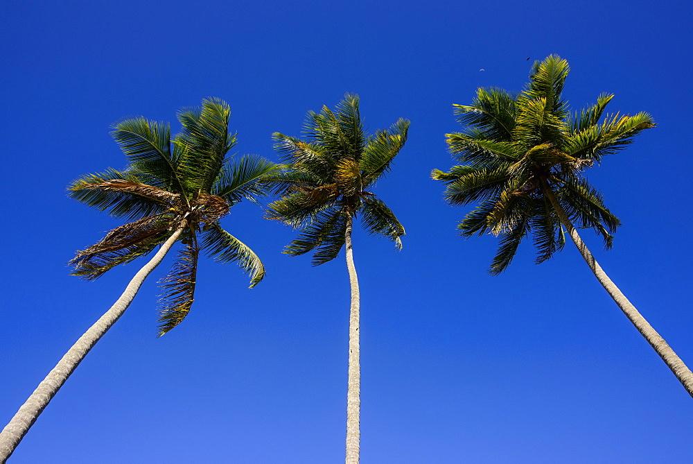 Playa Rincon, Las Galeras, Semana peninsula, Dominican Republic, West Indies, Caribbean, Central America