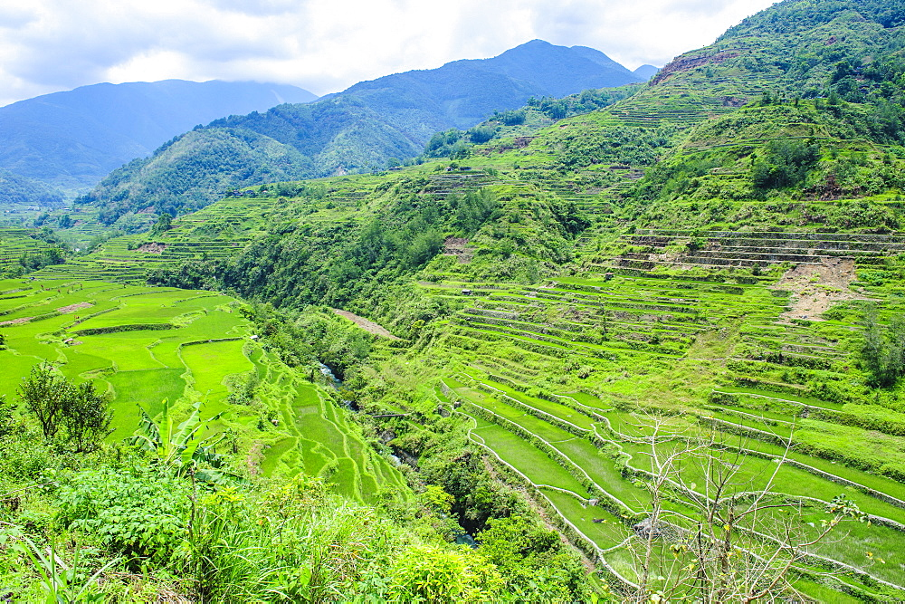 Hapao rice terraces, Banaue, UNESCO World Heritage Site, Luzon, Philippines, Southeast Asia, Asia