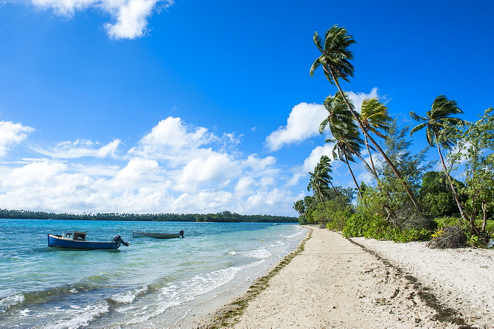 Palm fringed white sand beach on an islet of Vavau, Vavau Islands, Tonga, South Pacific, Pacific