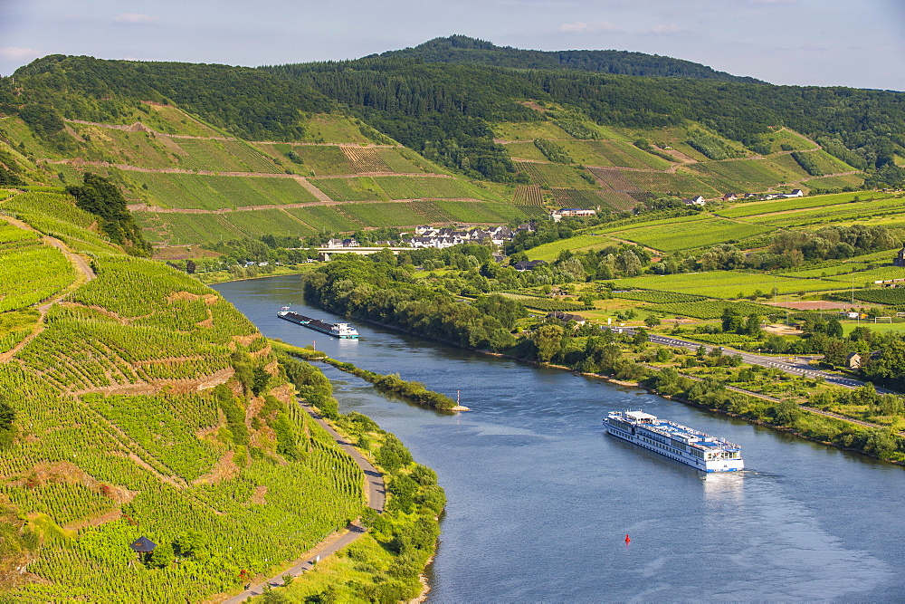 Cruise ship passing through the Riverbend in Bremm, Europe's steepest vineyard location, Moselle Valley, Rhineland-Palatinate, Germany, Europe