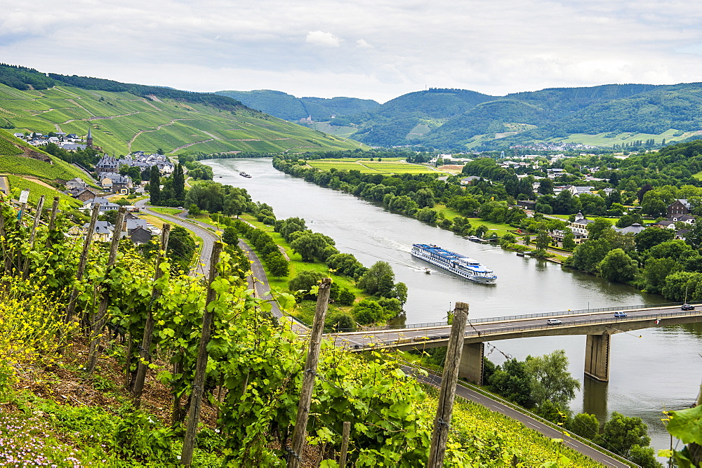 Cruise ship passing the vineyard near Lieser in the Moselle Valley, Rhineland-Palatinate, Germany, Europe