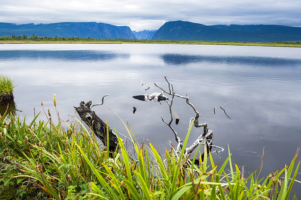 Jerrys pond in the Unesco world heritage sight, Gros Mourne National Park, Newfoundland, Canada