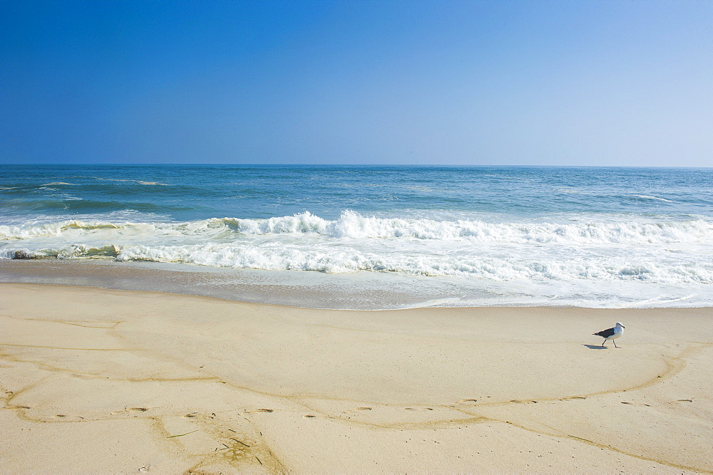 Long sandy beach in the Hamptons, Long Island, New York State, United States of America, North America