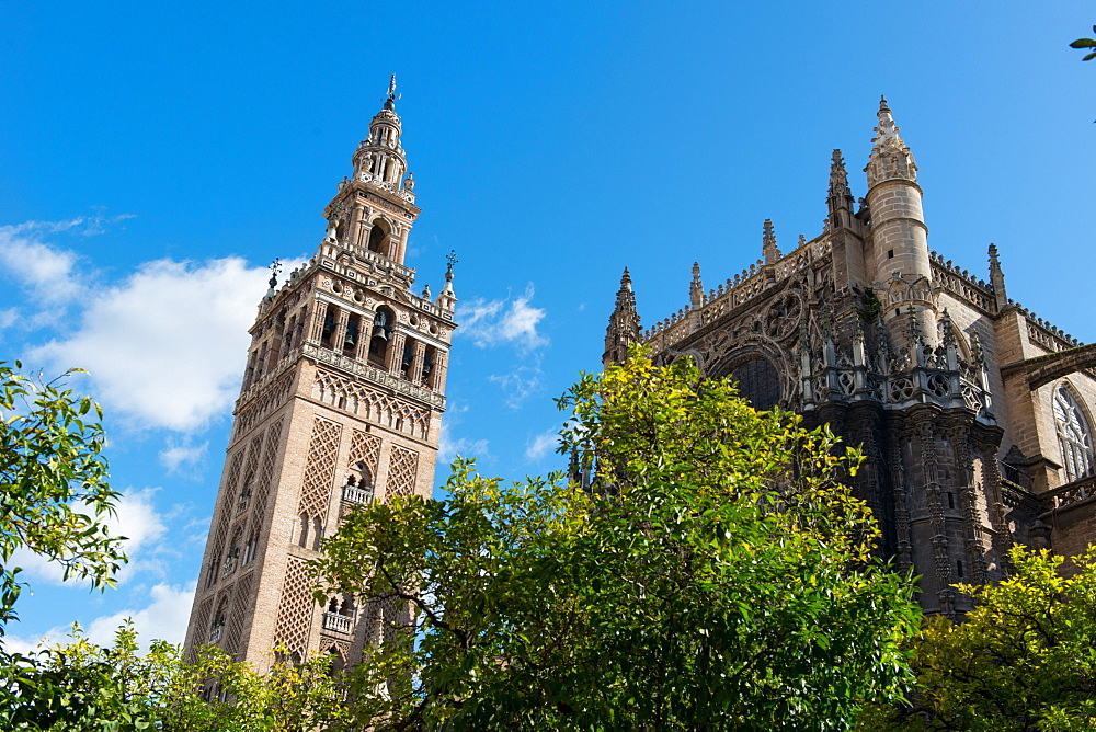 Sevilla Cathedral and Giralda, UNESCO World Heritage Site, Seville, Andalucia, Spain, Europe